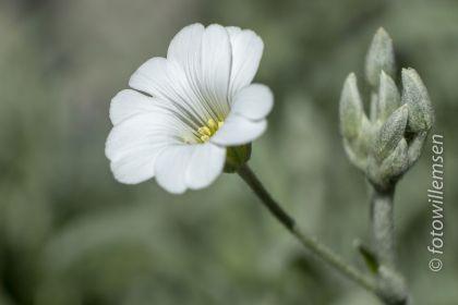 bloemen-e-d