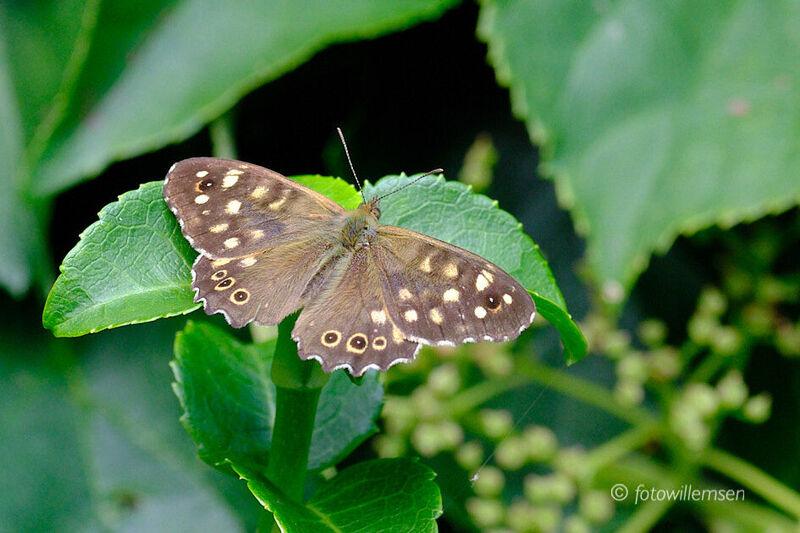 insecten-en-vlinders